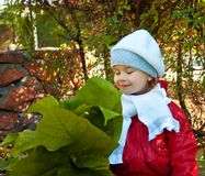 Little girl smells leaves Royalty Free Stock Photo