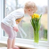 Little girl smells narcissus flowers Stock Images