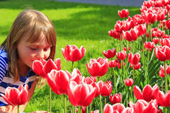 Little girl smells red tulips on the flower-bed Stock Photography