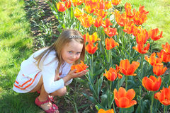 Little girl smells tulips on the flower-bed Royalty Free Stock Images