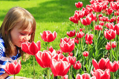 Little girl smells tulips on the flower-bed Stock Photography