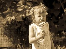 Little girl is sniffing flower, Little girl is twisted, Funny Face, Carefree childhood. stock image