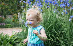 Little girl is sniffing flowers. Stock Photo