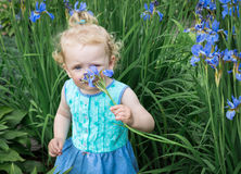 Little girl is sniffing flowers. Stock Image