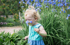 Little girl is sniffing flowers. Royalty Free Stock Photo