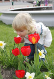 Little girl sniffing tulips Royalty Free Stock Image
