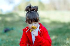 Little girl sniffs wildflowers on a meadow. Walking outdoor. Cute child and summer flowers, wildflowers beauty stock photography