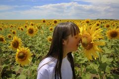 Little girl speaking with sunflower royalty free stock photo
