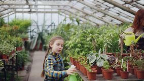 Little girl is spraying green pot plants using spray bottle while her mom is watering flowers with watering-pot. Growing. Little girl is spraying green pot stock video