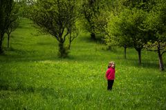 Little girl in a spring plum orchard Stock Images