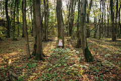 Little girl standing in the forest with ferns Royalty Free Stock Image