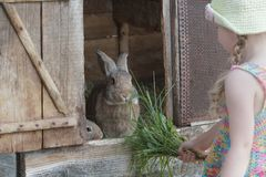 Little girl standing in front of farm hutch with domestic rabbits. Outdoors Royalty Free Stock Images