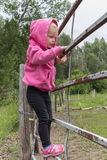 Little girl standing on a gate. Little standing on a gate railing wearing a pink sweater black pants and pink shoes Stock Image
