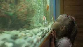 A little girl looks at the fish swimming in the aquarium with curiosity. A little girl standing at a large aquarium with curiosity considering floating fish stock video