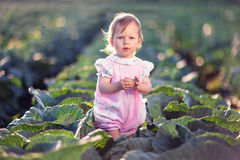 A little girl stands in the middle of a field of cabbage. Royalty Free Stock Photos