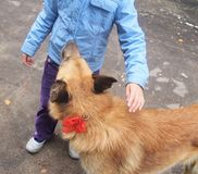 Little girl stroking a dog. Outdoor Royalty Free Stock Photo