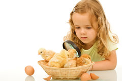 Little girl studying easter chickens Royalty Free Stock Photo