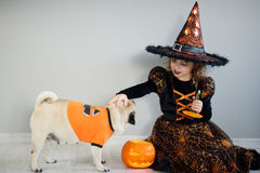 Little girl in a suit of evil sorcerer sits on floor and irons an amusing pug. On a doggie have put on an orange sweater. Nearby there is a pumpkin - Halloween royalty free stock image