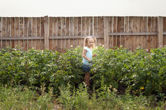 Little girl in a summer garden Royalty Free Stock Images