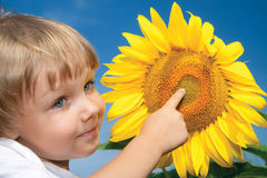 Little girl and sunflowers. Beautiful little girl and sunflowers Royalty Free Stock Images
