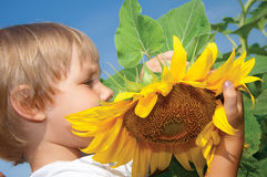 Little girl and sunflowers. Beautiful little girl and sunflowers Royalty Free Stock Photo