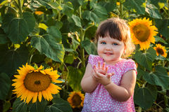 The little girl in the sunflowers Stock Image