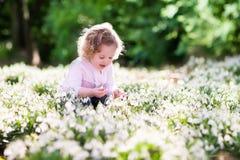 Little girl in sunny flower field Royalty Free Stock Photo