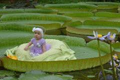 Little Girl On Super Leaf. Qute little girl sitting on a super leaf (Victoria Amazonica or Victoria Regina) in a botanical garden in Belgium Stock Photography