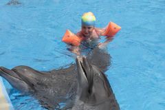 Little girl swim with dolphins stock photography