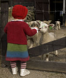 Little girl talking to the lambs. Little girl in woolen clothes looking at the lambs Stock Photo