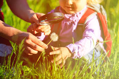 Little girl with teacher examining field flowers using magnifying glass Royalty Free Stock Images