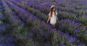 Little girl touches lavender while being in a lavender field. Aerial shoot stock video footage
