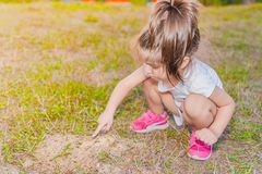 Little girl touching little ants with her finger on ant hil royalty free stock photos