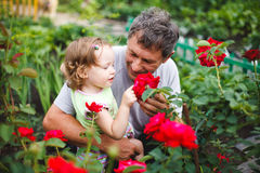 Little girl touching flower with grandfather in garden of roses Royalty Free Stock Images