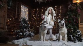 Little girl with two dogs Laika among the Christmas trees in the snow stock footage