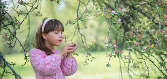 Little girl under blooming apple tree stock photos