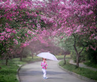 Little girl under blooming cherry tree royalty free stock image