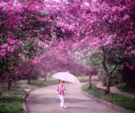 Little girl under blooming cherry tree