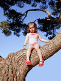 Little girl up a tree Stock Images