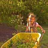 Little Girl Using Yellow Wheelbarrow. This 8 year old Caucasian girl with braided pigtails is using a yellow wheelbarrow in the yard Royalty Free Stock Images