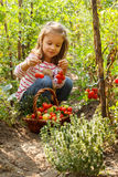Little girl in a vegetable garden Stock Photo