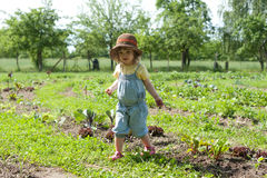 Little girl in vegetable patch Royalty Free Stock Photo