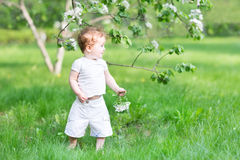 Little girl walking in an apple tree garden Royalty Free Stock Photography