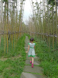 Little girl walking on the Bamboo path. Chinese  little girl walking on the Bamboo path Royalty Free Stock Photography