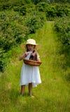 Little girl walking through a blueberry farm Royalty Free Stock Photo