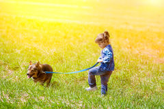 Little girl walking with dog Royalty Free Stock Image