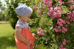 Little girl in walking in the garden, sniffing pink roses. royalty free stock image