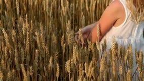 a little girl walking on golden field stock video footage
