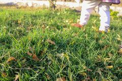 Little girl walking on the green grass in a park wearing white leggings royalty free stock image