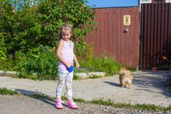 Little girl walking with her ??dog on a leash Royalty Free Stock Image